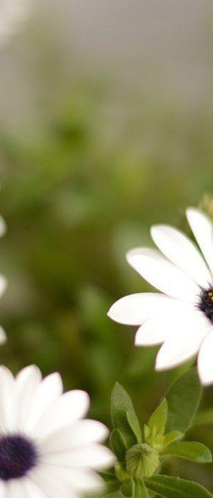 Dim-716b_fleurs1